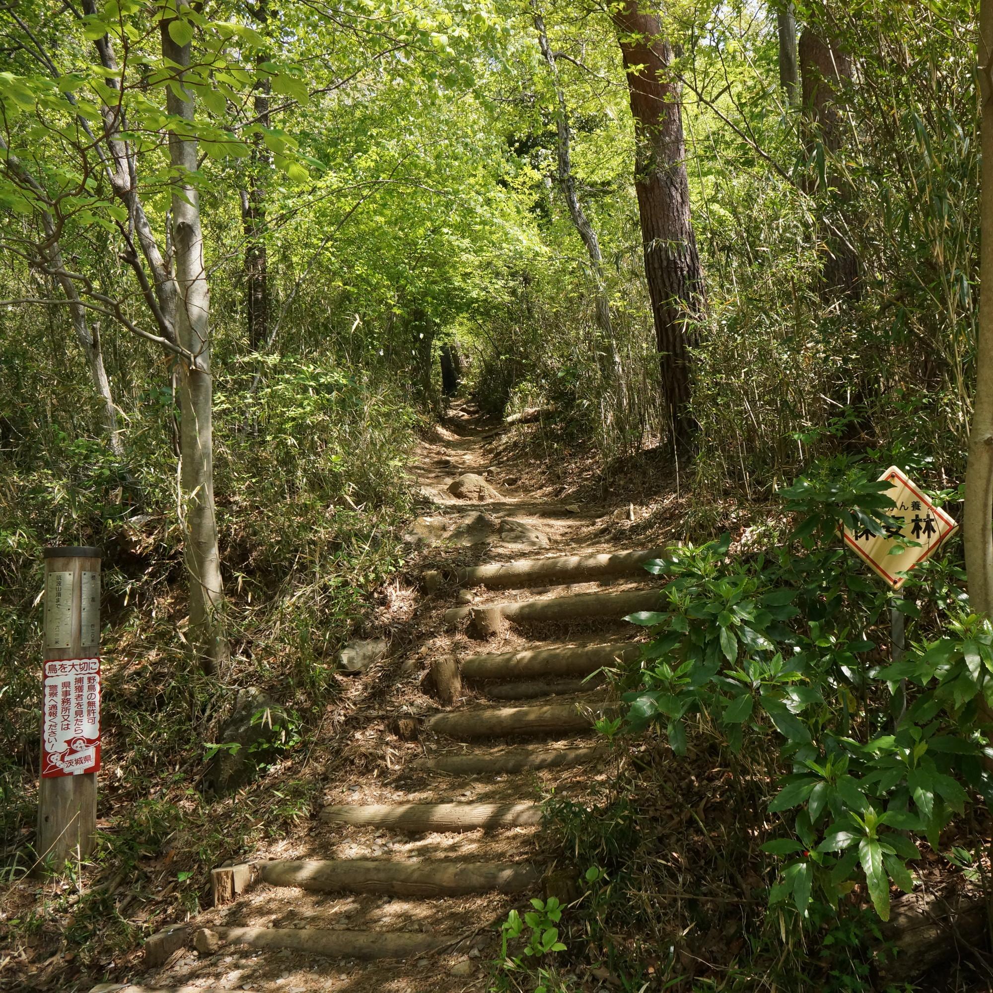 新緑のトンネルの先は780段の強烈な階段がある登山道。周回コースはこの登山道に入りません。