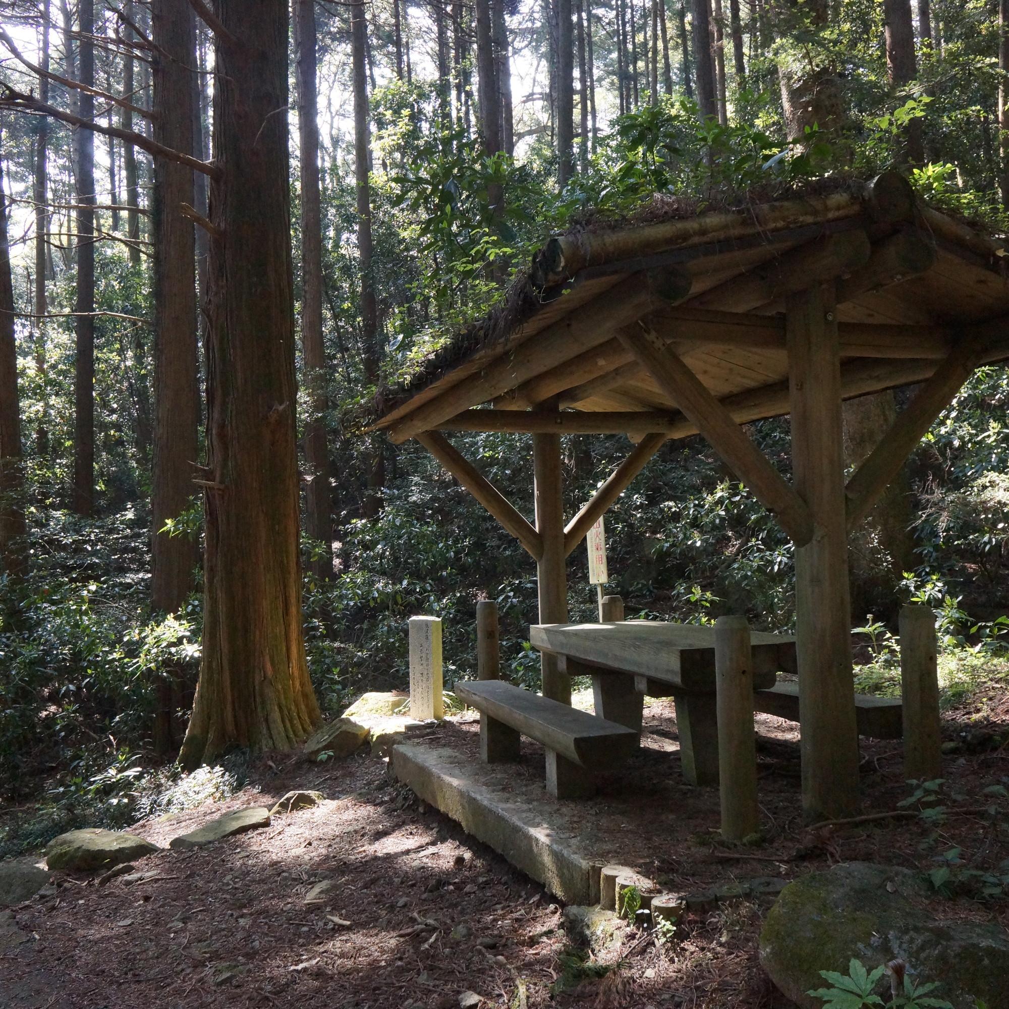 丸太の小屋組みと屋根の草木がアーキテクチャ
